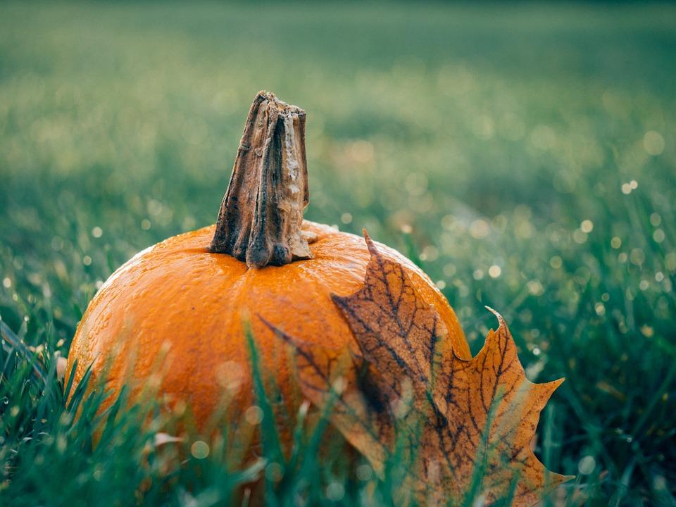 Journée Halloween |